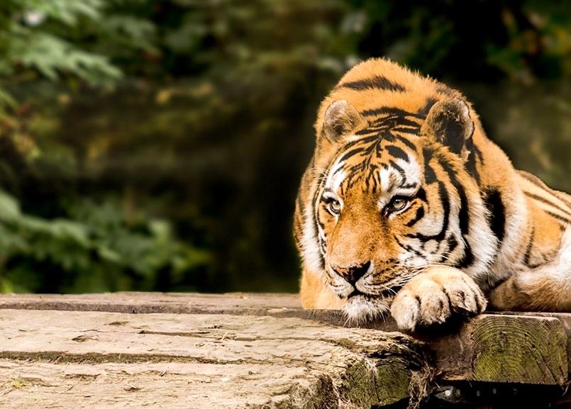 Austin Zoo at Lakeway Resort and Spa, Lakeway
